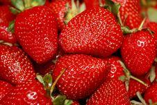 Free Basket Of Fresh Strawberries Royalty Free Stock Images - 15618759
