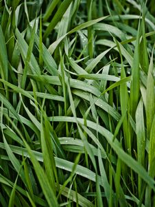 Free Plots Of Grass Stock Photo - 15618800