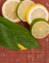 Free Limes And Lemon Slices Stock Photos - 15624883