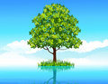 Free Tree In The Water Royalty Free Stock Image - 15625026