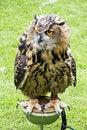 Free Big Bird Watching You Stock Image - 15626271