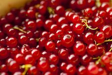 Free Redcurrant Royalty Free Stock Photography - 15620017
