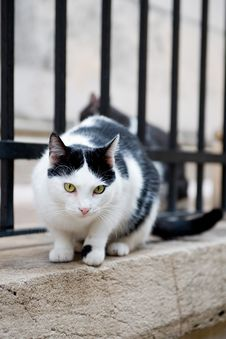 Free Cat On The Wall Royalty Free Stock Images - 15621869