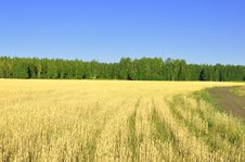 Landscape With Wheat Field Royalty Free Stock Photo