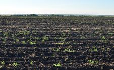 Free Fertile, Plowed Soil Of An Agricultural Field Royalty Free Stock Images - 15624689