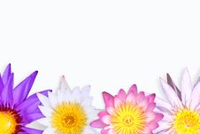 Free Color Of Lotus. Royalty Free Stock Images - 15625189