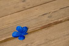 Free Bluel Flower On The Wooden Floor. Royalty Free Stock Image - 15625326