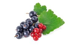 Free Black And Red Currant2 Royalty Free Stock Images - 15625729