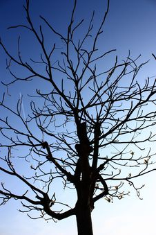 Free Dead Tree Royalty Free Stock Photography - 15627407