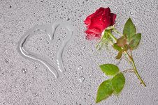 Free Red Rose Royalty Free Stock Photography - 15629147