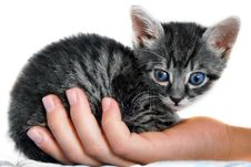 Free Little Kitty On Hand Royalty Free Stock Photos - 15629968
