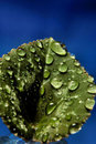 Free Water Drops On Leaf Stock Photos - 15639233