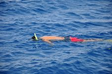 Free Snorkeling Royalty Free Stock Images - 15630339
