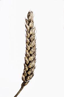 Free Moldy Grain Stock Photos - 15639243