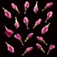 Free Pink Flower Buds Royalty Free Stock Images - 15639499
