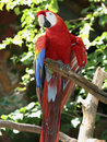 Free Curious Parrot Stock Images - 15642114
