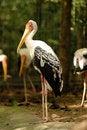 Free Painted Stork Stock Photo - 15644610