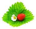 Free Strawberry Royalty Free Stock Photo - 15646305
