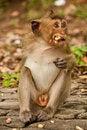 Free Little Hungry Monkey Royalty Free Stock Photo - 15648565