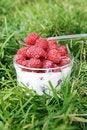 Free Fresh Raspberries With Milk Stock Photography - 15649632