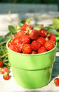 Free Ripe Juicy Strawberries In A Green Cup Stock Photography - 15649672