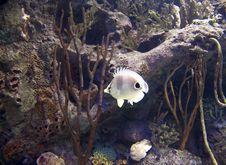 Free Angelfish Stock Photography - 15641632