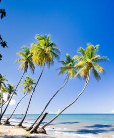 Free Trinidad Royalty Free Stock Image - 15641876
