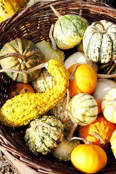 Free Pumpkins Royalty Free Stock Image - 15642066