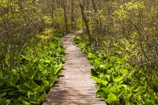 Free Wooden Path Royalty Free Stock Images - 15642139