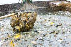 Free Harvesting Pond Stock Photos - 15642163