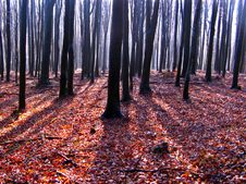 Free Autumn At Forest Stock Photo - 15643000