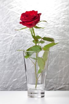 Free Red Rose Stock Images - 15643354