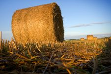Bales Of Straw Close-up In The Field Royalty Free Stock Photo