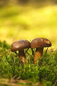 Free Edible Mushroom Royalty Free Stock Images - 15645459