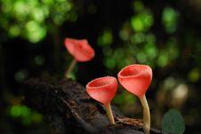 Free Mushroom Stock Image - 15645781