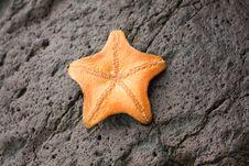 Free Orange Starfish Stock Images - 15646914