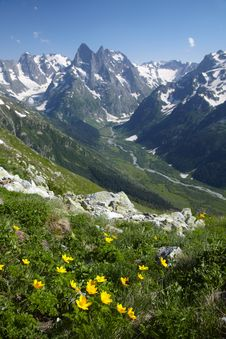 Free Yellow Flower In A Mountains Royalty Free Stock Photos - 15647038