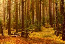 Free Fairy Wood Stock Image - 15647091