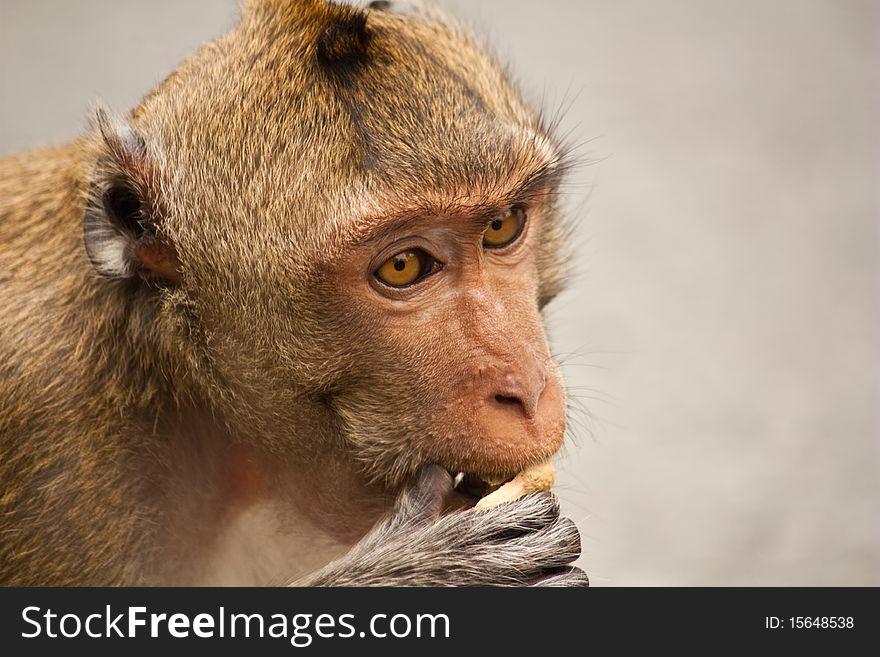 Little hungry monkey