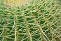 Free Close Up Of A Cactus : Coryphantha Stock Photos - 15652073
