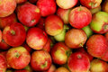 Free Apples Stock Images - 15658904