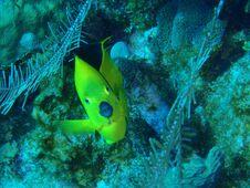 Free Inquisitive Fish Royalty Free Stock Photo - 15650855