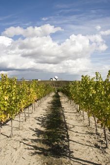 Free Rows Of A Vineyard Stock Photography - 15651462