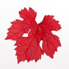 Free Red Leaf Stock Images - 15652704