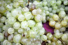 A Lot Of Ripe Grapes Kish Mish Stock Images