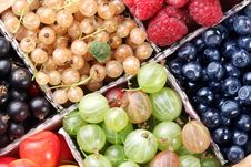 Free Clourful Berries Royalty Free Stock Photo - 15654395