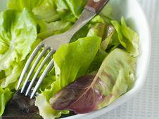Free Bowl Of Lettuce Stock Photos - 15656713