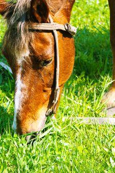 Free Horse Stock Photo - 15657040