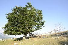 Free Nice Tree Stock Photos - 15657783