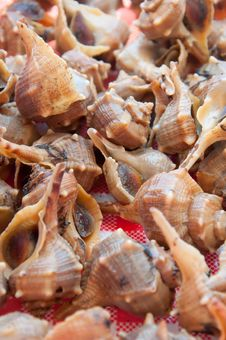 Free Snail Of Sea Stock Images - 15658584